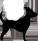 Sigrid Octon - Comportementaliste Canin & Félin - Spécialiste de la relation Homme / Animal