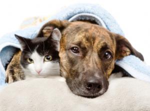 Éducateur comportementaliste canin & félin à Fontainebleau
