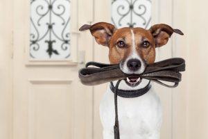 Promenades et visites à domicile pour les chiens