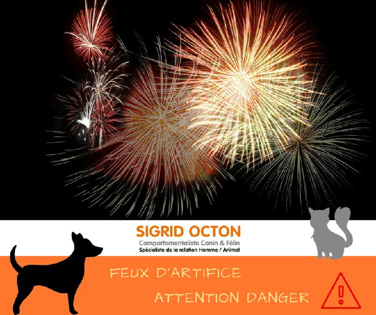 Danger des feux d'artifice pour nos animaux, Éducateur comportementaliste canin & félin à Fontainebleau