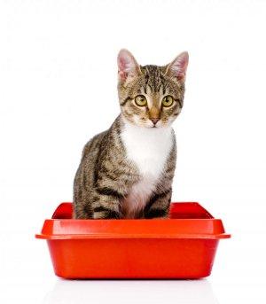 Conseils litière idéale chat, Sigrid Octon Comportementaliste canin et félin en seine et marne